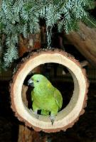 Rinschaukel für Papageien