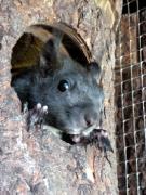 Nisthöhle für Eichhörnchen