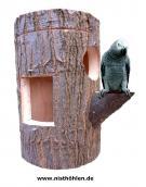 Nisthöhle mit Vogel